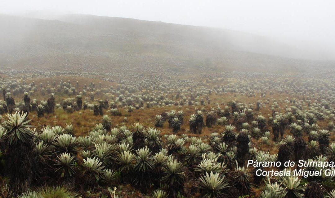 RAPE fortalece la restauración y conservación de los páramos que hacen parte de la Región Central